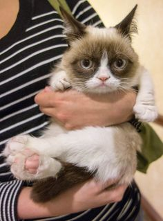 The Forty Cutest Grumpy Cat Pictures  http://www.pbh2.com/pets-animals/grumpy-cat-pictures/?utm_source=outbrainpaid&utm_medium=referral&utm_campaign=outpaidwest