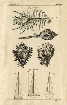 Click on Images to Enlarge Click HERE for the Full Size Printable PDF Click HERE for the Full Size Printable PDF These are 2 very early Natural History Prints from a circa 1754 Encyclopedia. They have some wonderful Seashell Engravings on them. There are a few fun Steampunk looking elements on these too, as well...Read More »
