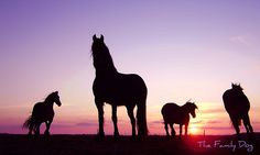 silhouettes just beautiful! All The Pretty Horses, Beautiful Horses, Animals Beautiful, Animals And Pets, Baby Animals, Cute Animals, Equine Photography, Animal Photography, Silhouettes