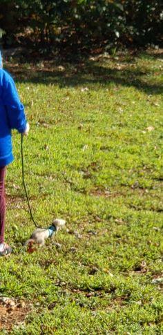 Pet Ferret, Bird, Pets, Animals, Animales, Animaux, Birds, Animal, Animais