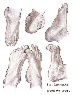 Studies of Hands and Feet. Col-Erase(Brown) on Animation Paper Had to draw these for our First Portfolio... Took a long time!