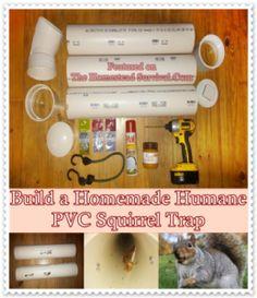 Build a Homemade Humane PVC Squirrel Trap