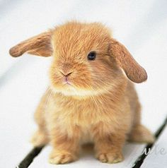 cute animal cute animals (bailey's comment: awwwwww! a bunny rabbit. soooooooooooooooooooo cute!!!!)