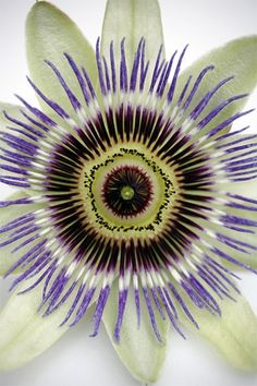 Passion flower - so pretty
