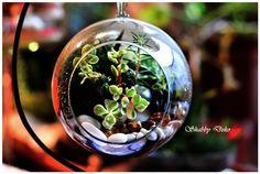 Glass Ball, Terrarium, Garden, Home Decor, Terrariums, Garten, Decoration Home, Room Decor, Lawn And Garden