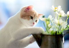 Blomstene og plantene som er giftige for hund og katt - viiivilla I Love Cats, Crazy Cats, Cute Cats, Funny Cats, Cat Flowers, Owning A Cat, Cat Carrier, Cat Wallpaper, All About Cats