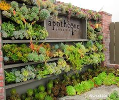 Wow, this is gorgeous! Thank you for the display Succulent Cafe. Photo taken by Sweetstuff !!