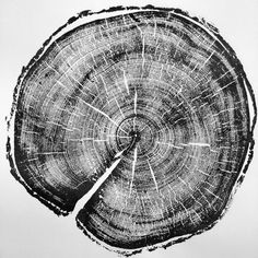 183 year old Uinta Lodge Pole Pine; Original ink 18x24 by Linton Art.