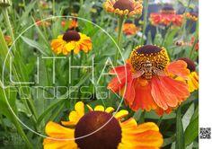 Gelborange Blumen mit Schwebfliege :) #blumen #pflanzen #schwebfliege Fruit, Beautiful, Instagram Posts, Plants, Hoverfly, Botany, Photo Studio, Nature, Creative