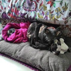 Habían visto a los perros en tacos? #frio #amolapeli #llegoelinvierno #comfy