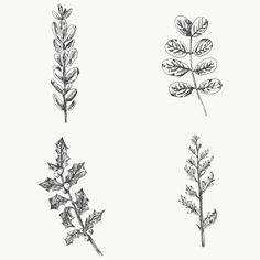 Leaves Doodle, Branch Vector, Christmas Plants, Plant Vector, Free Hand Drawing, Hand Drawn Flowers, Leaves Vector, Flower Branch, Plant Illustration