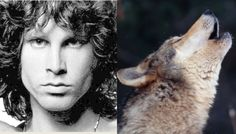 """White Wolf: Jim Morrison and the Wolves: """"Wilderness: The Lost Writings of Jim Morrison"""""""