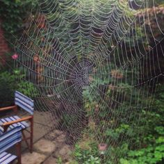 There's some kind of chaotic structure in spiderwebs i find wildly attractive