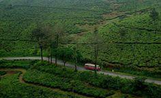 fullonwedding-honeymoon destination-domestic honeymoon spotlight-gavi route