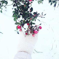 Морозная суббота и румяные розы  еще одна сторона петербургской осени #hipocolife #autumn#snow#morning#walk#nature#hhhand#roses#inspiration#frost#sun hipoco.com