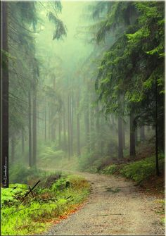 Enchanted Forest, Michelbach.