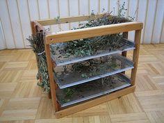 Séchage sur claies d'herbes aromatiques