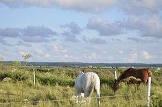 Horses Summer Photos, Horses, Animals, Summer Pictures, Animales, Animaux, Animal, Animais, Horse