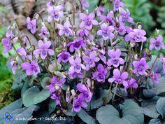 Цветы многолетники для сада — неприхотливые и долгоцветущие! | Красивый Дом и Сад