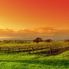 Barossa Valley, South Australia.  Gorgeous wine region, beautiful cellar doors, known for Shiraz.