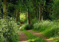 Forest path... reminds me of Little Red Riding Hood stories :)