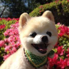笑顔/俊くん