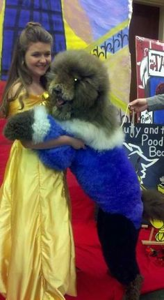 Beauty and the Beast! At Orchard Lake Pet Resort we strive to provide the best … – Tammy Shortridge – pet resort Creative Grooming, Dog Grooming Tips, Poodle Grooming, Pet Shop, Animals And Pets, Cute Animals, Poodle Cuts, Dog Haircuts, Pet Resort