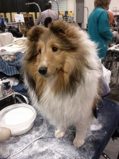 I fell in love with this little girl at the Michigan 2012 Winter Dog Classic