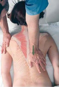 Basic Clinical Massage Therapy  Why wasn't this around when I went to massage school? Incredible visualization of the muscles.