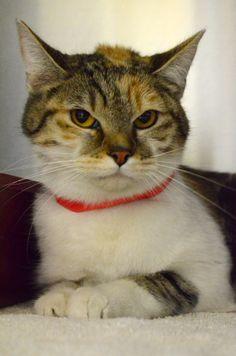 Adopt me! Animal Shelter, Adoption, Cats, Amazing, Animals, Animal Shelters, Foster Care Adoption, Gatos, Animales