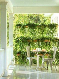 Privacy with hanging plants....ferns