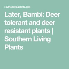 Later, Bambi: Deer tolerant and deer resistant plants | Southern Living Plants