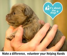 National Mill Dog Rescue: Make a difference, volunteer your helping hands.
