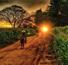 Zona rural mineira. Estado de Minas Gerais, Brasil.  Fotografia: http://www.portalanaroca.com.br Life Is Beautiful, Beautiful Sunset, Beautiful Places, Brazil Travel, Fantastic Art, Amazing Nature, Farm Life, Sunrise, Landscape Photography
