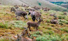 Mukurthi National Park n Peak, Nilgiris, Tamilnadu, India