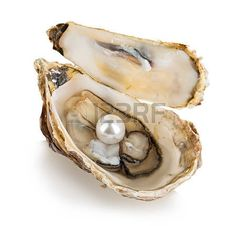 Oyster Shell Stock Photos Images, Royalty Free Oyster Shell Images ...