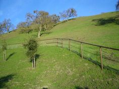 Pipe and non climb horse fence