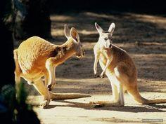 Animal Planet Channel 2015 | Wild Life Documentary | Wildlife Documentar...