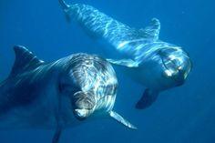 Inde : Les dauphins sont déclarés « personnes non-humaines »