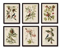 Vintage Bird and Botanical Print Set No. 2 Set of 6 Giclee Canvas Prints