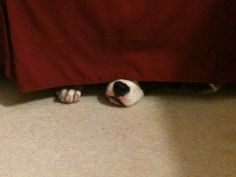 My dog Stella, playing hide and seek...I see you!