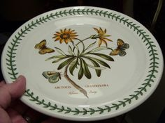 SIMPLY THE RAREST PORTMEIRION BOTANIC GARDEN PLATE THERE IS AFRICAN DAISY 3-FLY! #Portmeirion