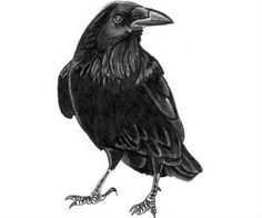 A crow in honor of my stepfather, who is a cancer survivor. Crow is his nickname.