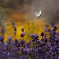 with gold and a butterfly... I love this color combination... ~V~