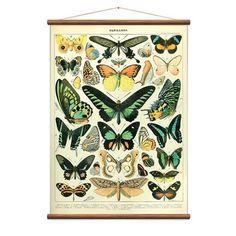 MONOQI   Papillons Karte