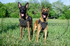Order Brand New Dog Nylon Harness and get really Multifunctional Walking and Training tool. It comes with control handle, adjustable straps and is lightweight. Dog Training Equipment, Leash Training, Dog Harness, Dog Leash, Belgian Malinois Dog, Dog Muzzle, Retriever Puppy, Small Breed, German Shepherd Dogs