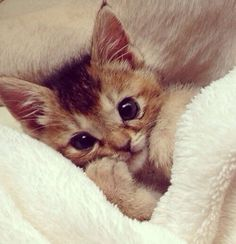 """""""Just for tonight can I sleep in your bed? I'll won't take up much room this time, I promise."""" #kitten #cute"""