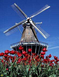 Kinderdijk - Neiuw Lekkerland, The Netherlands