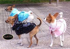 chubasqueros para perros