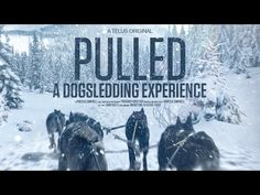 Pulled - A Dog Sledding Experience. This real-time dog sled tour was filmed in the Bow Valley, Alberta, Canada. Sled Dogs, Animation Reference, Dog Photos, Beautiful Dogs, My Passion, Husky, Homeschool, Adventure, Youtube
